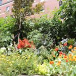 UPMC Shadyside Gardens Add Beauty to Hospital Grounds