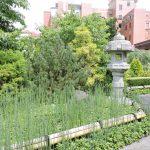 UPMC Shadyside Gardens Add Beauty to Hospital Grounds